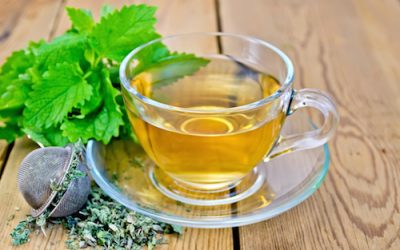 Tea Profile: Lemon Balm